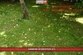 GÂNDIRE AFORISTICĂ (51)