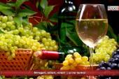 Struguri, soiuri, vinuri …și nu numai