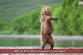 WWF sau WTF? ONG sau companie în toată regula?