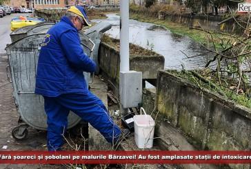 Fără șoareci și șobolani pe malurile Bârzavei! Au fost amplasate stații de intoxicare!