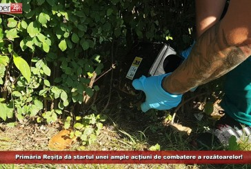 Primăria Reșița dă startul unei ample acțiuni de combatere a rozătoarelor!