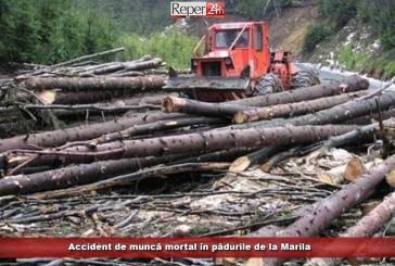 Accident de muncă mortal în pădurile de la Marila