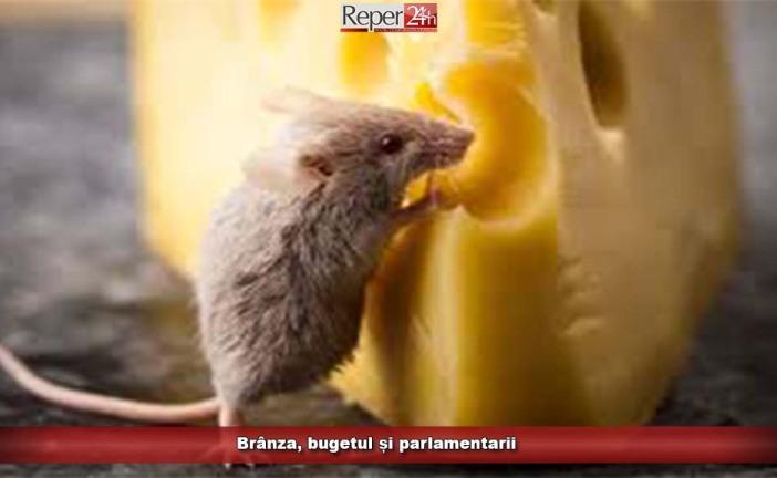 Brânza, bugetul și parlamentarii