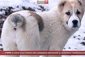 PNRR-ul, între visul frumos din campania electorală și realitatea românească