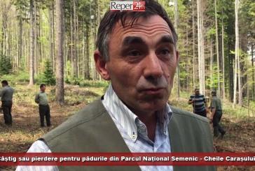 Câștig sau pierdere pentru pădurile din Parcul Național Semenic – Cheile Carașului?
